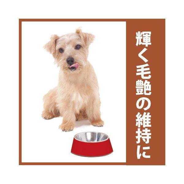 プッチープー 40g 抗酸化 サプリクッキー 犬おやつ 無添加 国産 ※ネコポス便対応、日時指定、代引き不可|aicarrot|02