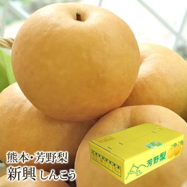 新興梨 しんこうなし 熊本県産 芳野梨 約5kg 10〜14玉入り   くだもの ギフト プレゼント お祝い 内祝い