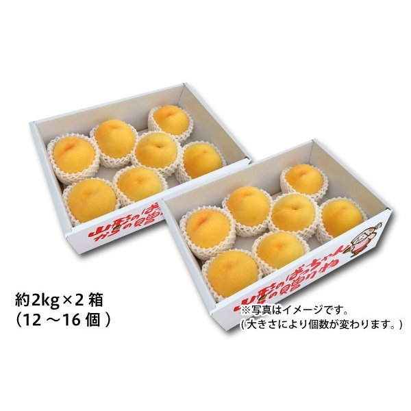 山形の黄桃 ご自宅用 約2kg×2箱(25-U2)