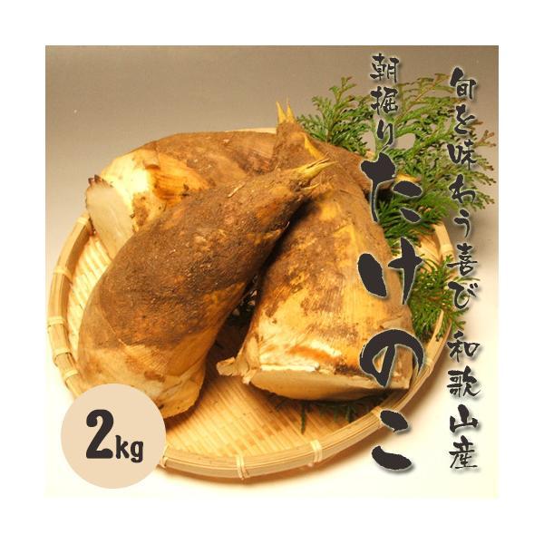 和歌山産 朝堀り筍(たけのこ)2kg ご予約送料無料 旬を味わう厳選品 お花見やバーベキューもタケノコ