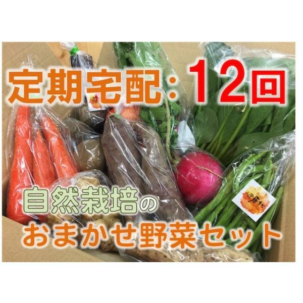 【定期宅配:12回】おまかせ☆自然栽培野菜セット