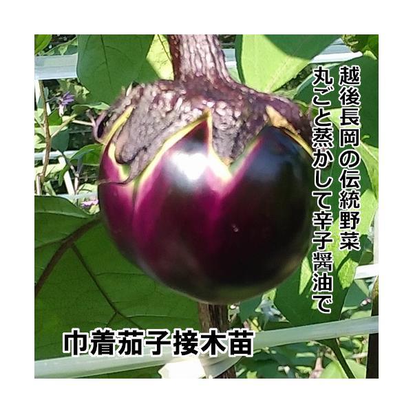 接木なす苗 巾着茄子 接木苗 茶ポット |akagefarm