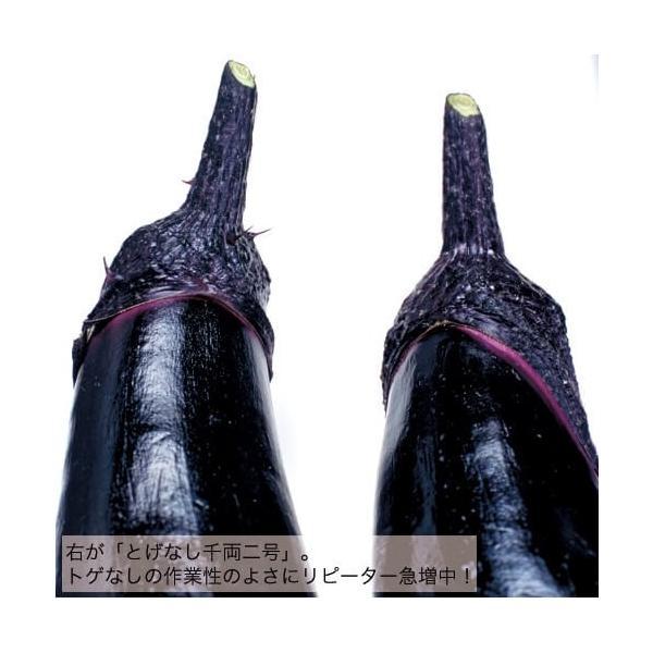接木とげなし千両二号苗 9cm黒ポット |akagefarm|03