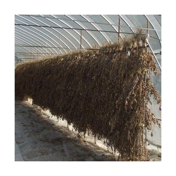 新潟のお土産 ご飯のお供に/ こうじや手造り しょうゆの実 500g|akagefarm|05