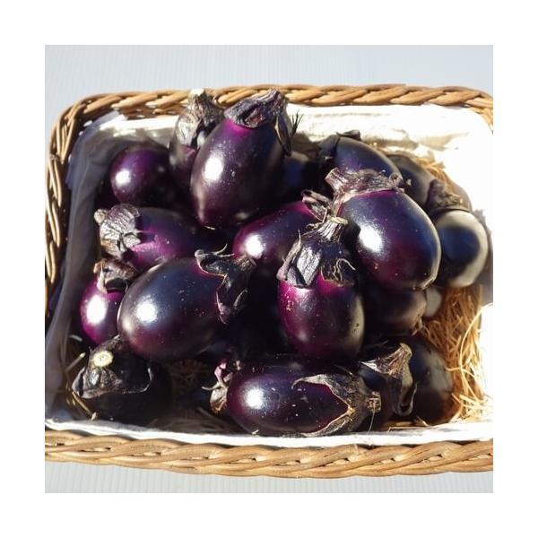 梵天丸なす 小茄子 1kg入り|akagefarm