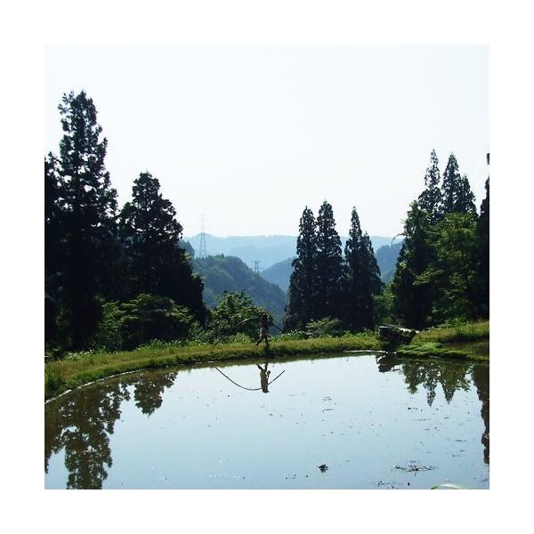 魚沼十日町産こしいぶき 棚田天水田米 5kg 30年産|akagefarm|02