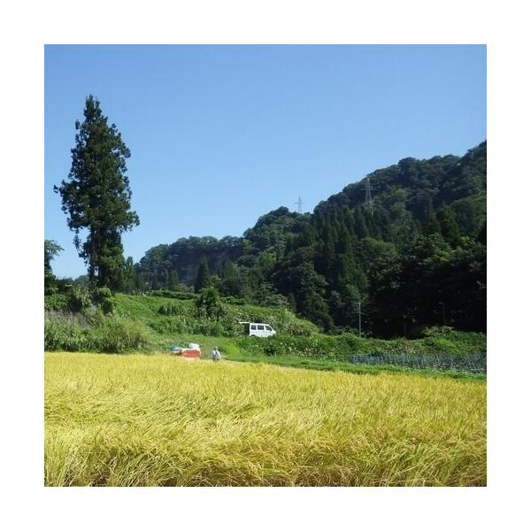 魚沼十日町産こしいぶき 棚田天水田米 5kg 30年産|akagefarm|03