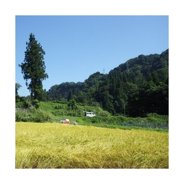 魚沼産コシヒカリ 棚田天水田米 5kg 令和1年産 精米直後発送 akagefarm 03