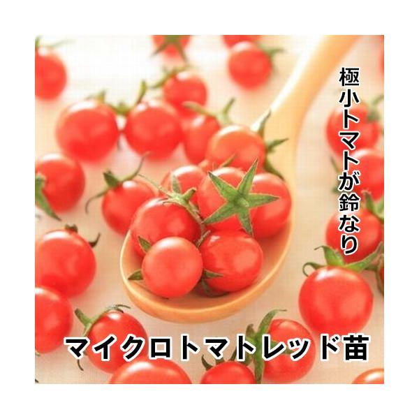 マイクロトマトレッド苗