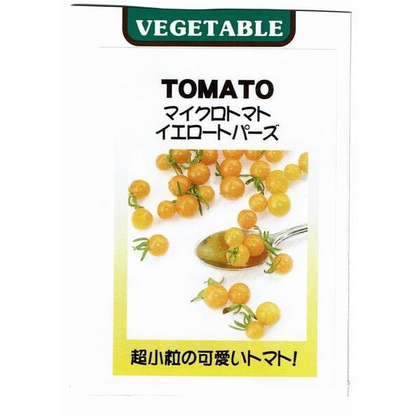 マイクロトマト イエロートパーズ 苗 白ポット|akagefarm|05