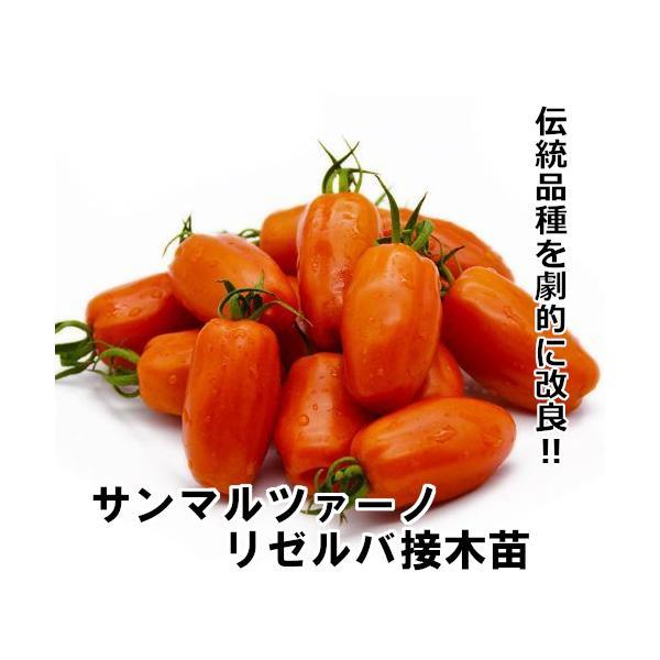 【マウロの地中海トマト】サンマルツァーノ リゼルバ 接木苗|akagefarm