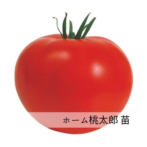 ホーム桃太郎苗 9cm黒ポット |akagefarm
