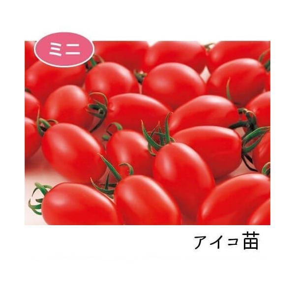 アイコ苗 9cm赤ポット|akagefarm