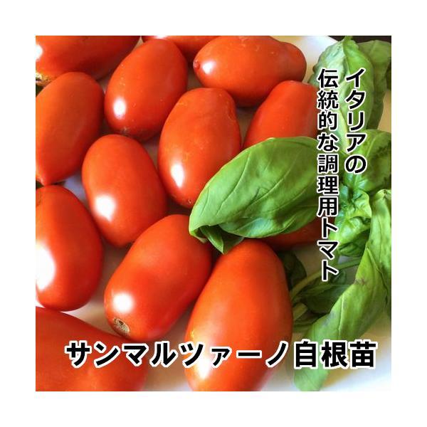 トマト苗 サンマルツァーノ 苗 緑ポット|akagefarm