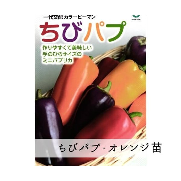 ちびパプ・オレンジ苗 9cm橙ポット|akagefarm