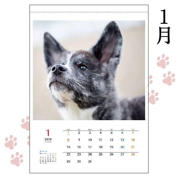 秋田犬カレンダー2018(A2カレンダー×1)犬 カレンダー 動物 かわいい もふもふ|akitagokoro|02