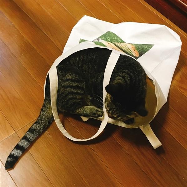 猫トートバッグ テニス Lサイズ 男女兼用 20リットル 大容量 ラケットバッグ ショッピングバッグ|amaneko|11