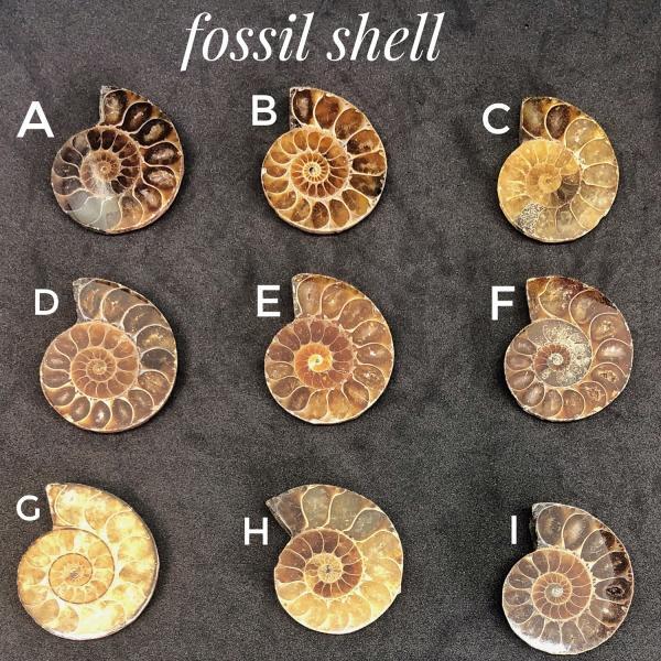 アンモナイト化石 穴あき|amazonquarts