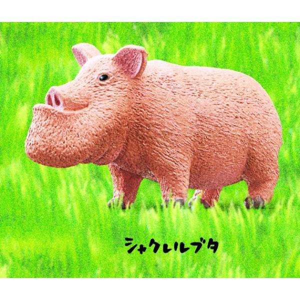 パンダの穴 シャクレルプラネット5 全6種セット|amyu-mustore|07