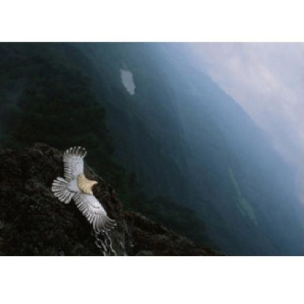 ネックレス メンズ イーグルフェザー シルバー925 ネイティブアメリカン ターコイズ 羽根 送料無料|angela-web|04