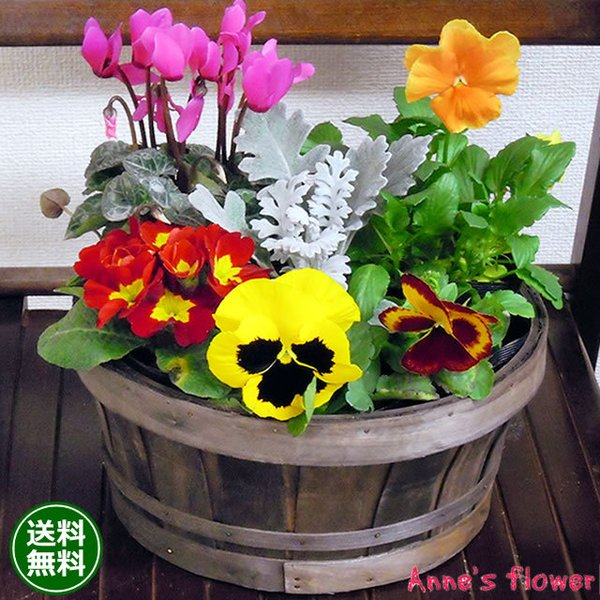 花 鉢植え 春まで楽しめる ミニガーデン 季節のお花 寄せ植え お祝い バースデー 歓送迎 送別 退職 贈り物 卒業