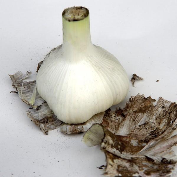 にんにく 青森県産 にんにく1kg SML混合 土付き 令和元年度産 福地ホワイト六片種|aomorihiba|03