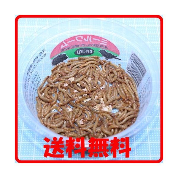  送料¥350 ポスト投函 川井ミルワーム 1パック(150匹位)詰め替え梱包(トカゲの餌、ヤモリの…