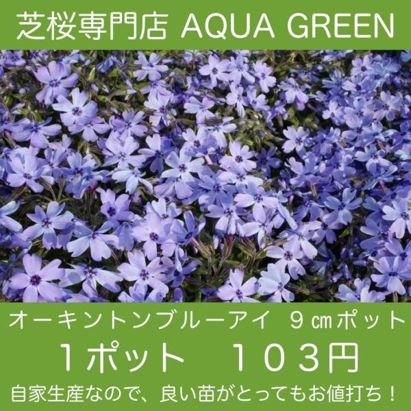 芝桜(シバザクラ)オーキントンブルーアイ(青い花) 1株 3号9センチポット レビューを書いて芝桜に良い特典あり! 芝桜専門店なので 高品質!最安値!