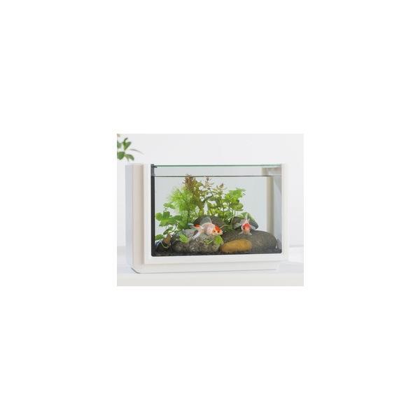 コトブキ ビュース ホワイト ガラス水槽セット (サイズ:W320xD180xH222mm 10L)|aquapet