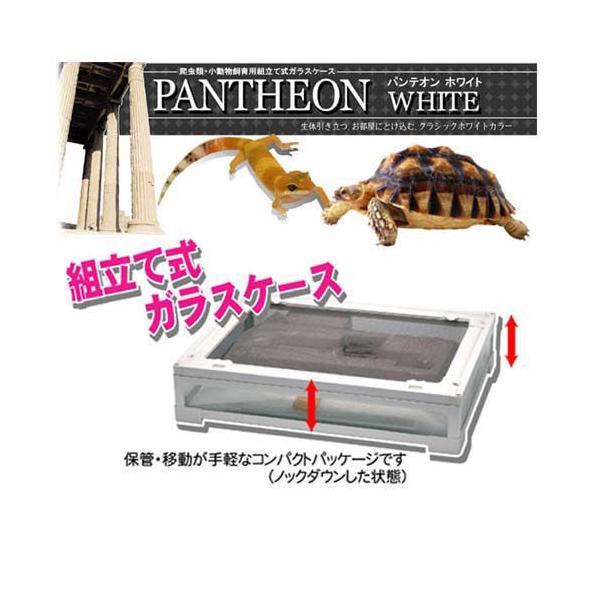 パンテオン ホワイト4535|aquapet|04