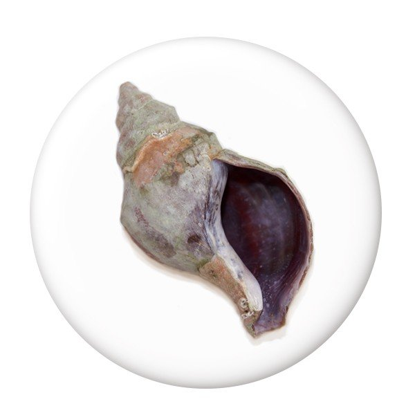 海の幸缶バッジ 【つぶ貝】 クリップ(ピンなし)タイプ