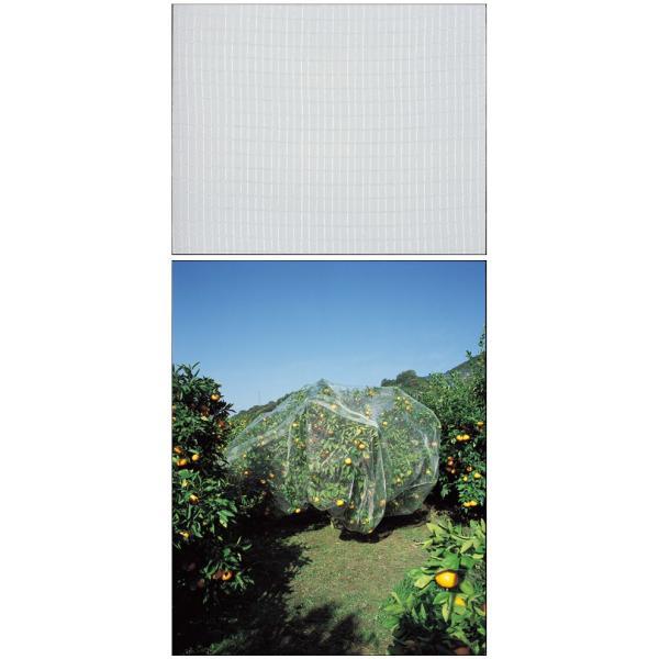 GS(キンボシ) 果樹すっぽり防鳥ネット 6×6m ※取寄品 7679|arde|02
