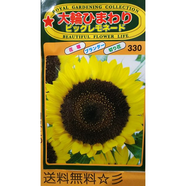 大輪 ひまわり ビッグ レモネード 向日葵 種 送料無料