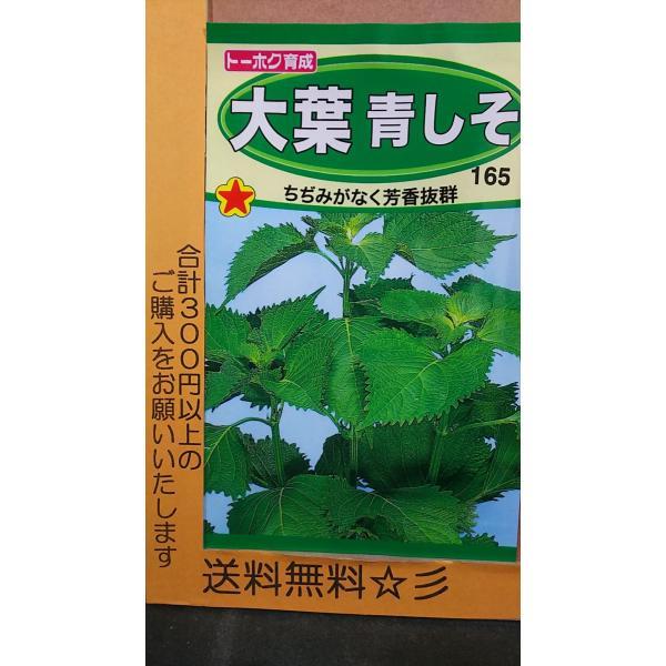 大葉 青しそ アオシソ 芳香 種 送料無料