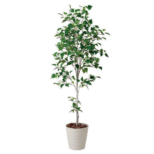 母の日 ギフト 花 光触媒 観葉植物 白樺 高さ180cm 光触媒観葉植物 消臭 抗菌 人工観葉植物 フェイクグリーン                                                                                                                             消臭・抗菌・防汚効果のアートグリーン