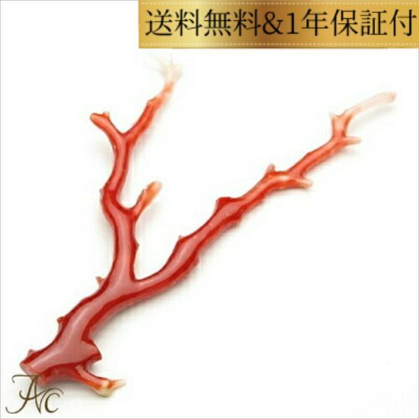 日本産血赤珊瑚 枝 ルース