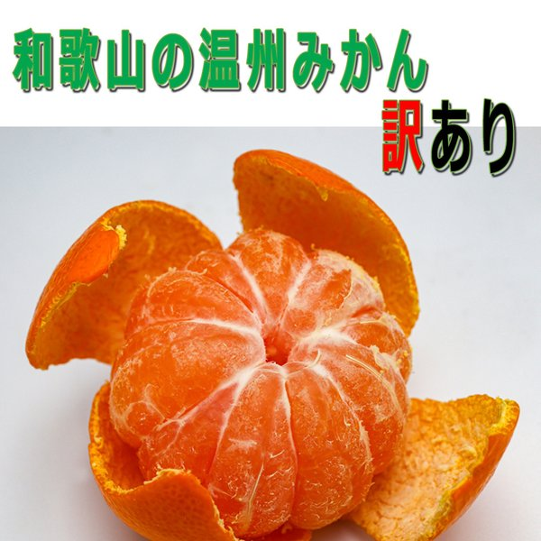 和歌山のミカン(蜜柑,みかん)超訳あり規格外品Mixサイズ-10Kg12月上旬ころ発送予定