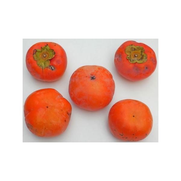 超超わけあり富有柿(規格外)約15Kg 50-70個入11月下旬頃発送