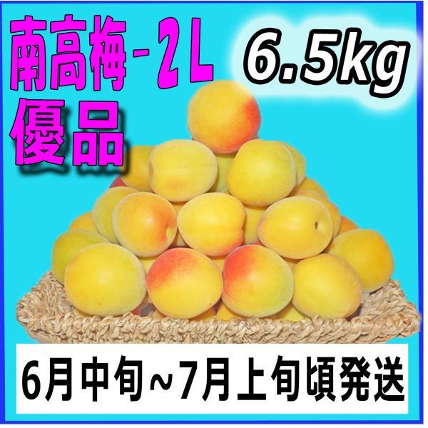 生梅南高梅優品2L-6.5kg梅干・梅酒・他、有機肥料使用/紀州和歌山県産青梅