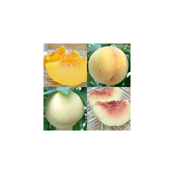 桃ももモモ ギフトセット 白麗&サンゴールド(8〜10個)【アダチ観光農園直送】|arumama