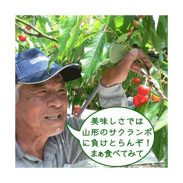 さくらんぼ 送料無料 アダチ観光農園 1kg|arumama|02