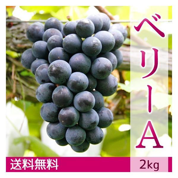 マスカット・ベリーA(種無し)ぶどう 送料無料 2kg|arumama