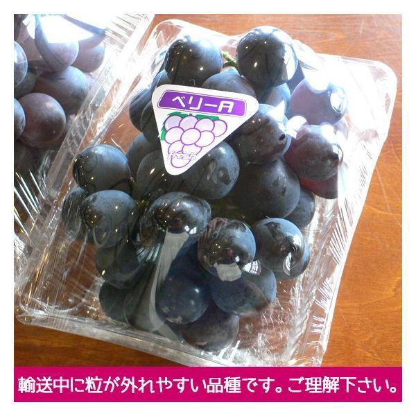 マスカット・ベリーA(種無し)ぶどう 送料無料 2kg|arumama|02