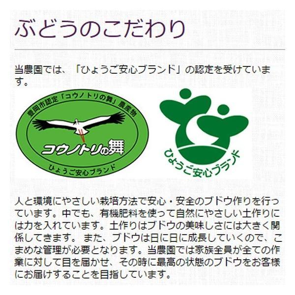 マスカット・ベリーA(種無し)ぶどう 送料無料 2kg|arumama|03