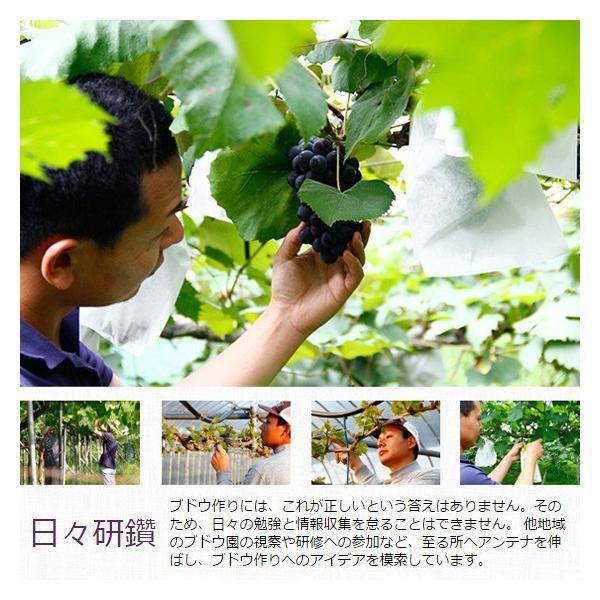 マスカット・ベリーA(種無し)ぶどう 送料無料 2kg|arumama|04