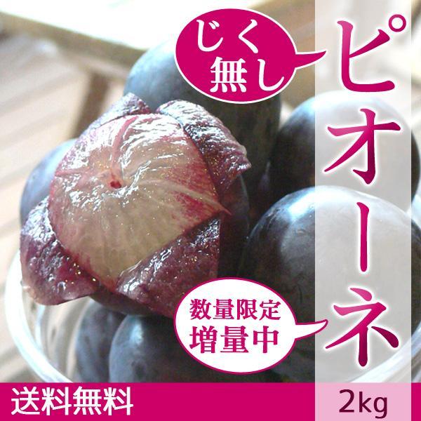ピオーネ じく無し 訳あり わけあり ぶどう 送料無料 2kg【+20%増量】|arumama