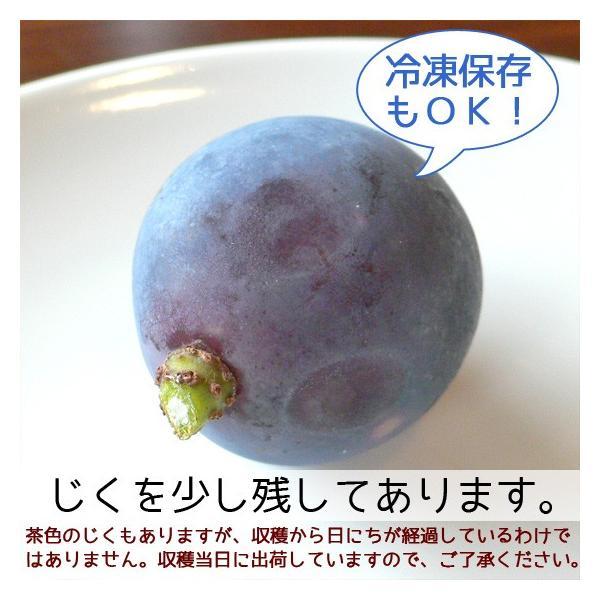 ピオーネ じく無し 訳あり わけあり ぶどう 送料無料 2kg【+20%増量】|arumama|02