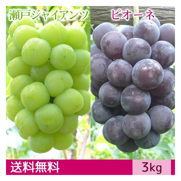 【予約】瀬戸ジャイアンツ&ピオーネ  ぶどう 送料無料 ギフト 3kg|arumama