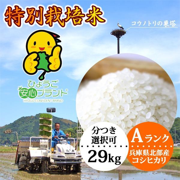 新米 玄米 29kg 白米 コシヒカリ特別栽培米 送料無料 当日精米|arumama