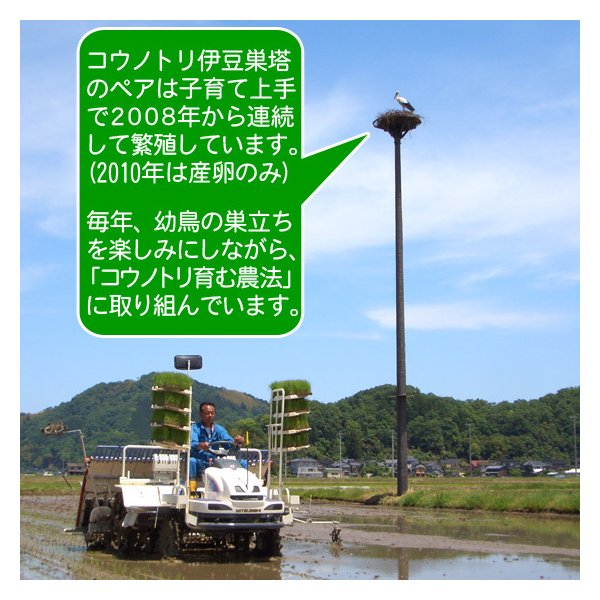 新米 令和元年産 玄米(精米無)農薬不使用 白米 コウノトリ米 10kg 当日精米 arumama 04